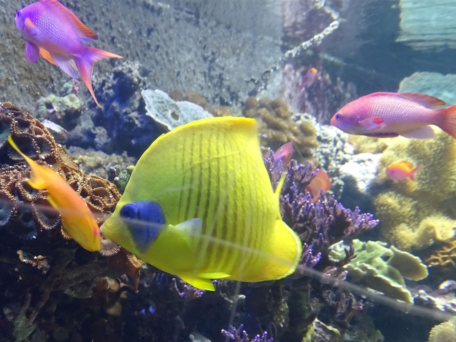 Sea Life London Aquarium Places Visited by Yhon Soto Solutions